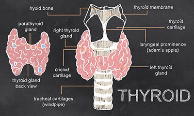Thyroid Treatments without prescription drugs