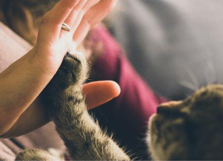 Cat Health Checklist