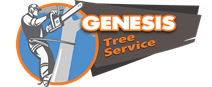 Stafford tree service contractor